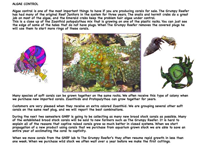 reef aquarium zoanthids