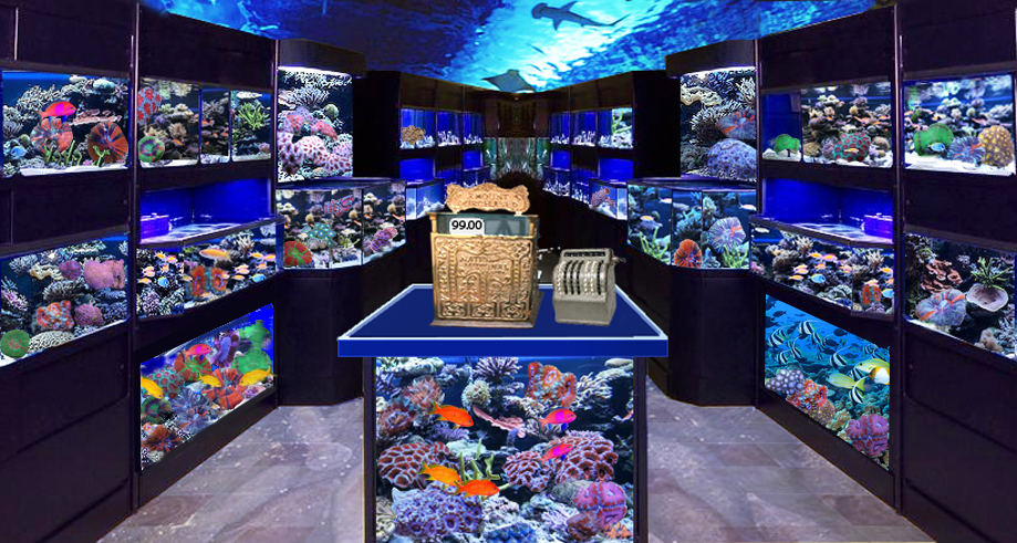 Starting a tropical fish store advanced videos for Salt water fish store