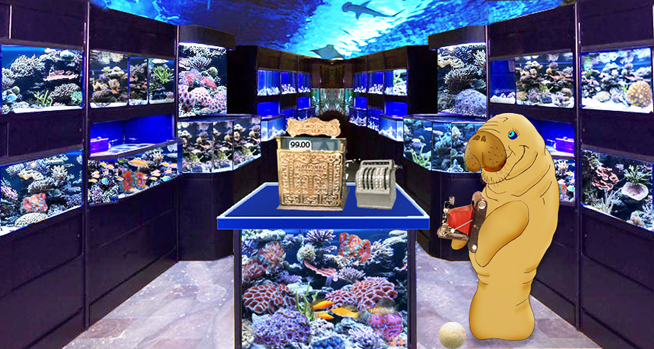 Starting a tropical fish store for Salt water fish store