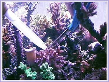 cutting corals