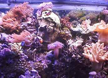 Center aquarium