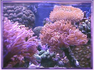 This is a picture of the top of my 55 gallon reef