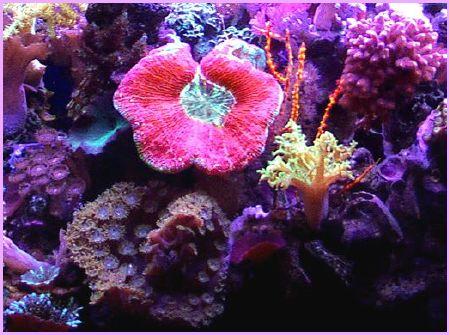 Sally Jo's reef in July 1998