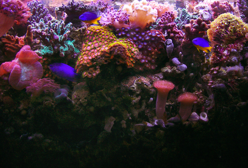 fish tank wallpaper. GARF#39;S REEF AQUARIUM WALLPAPER