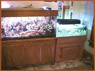 Reef Aquarium Farming News 21 P 2