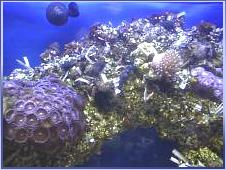 third reef