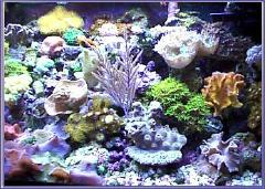 Reef Aquarium Farming News