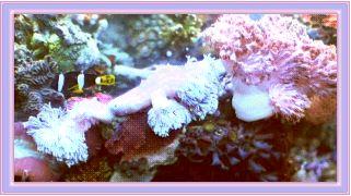 Reef Aquarium Farming News