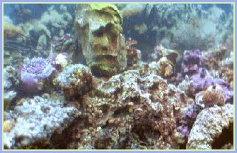 Reef Aquarium with face
