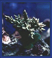 Reef Aquarium with coral