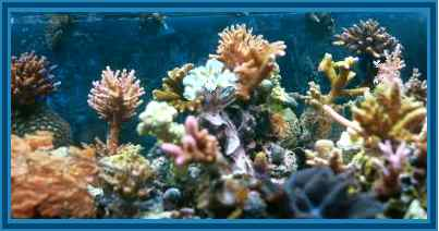 Reef Aquarium with sps coral
